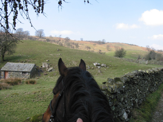 view of fields from horseback